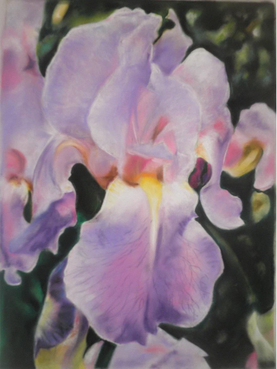 Christine VILLE - Iris - pastel sec 400 x 540